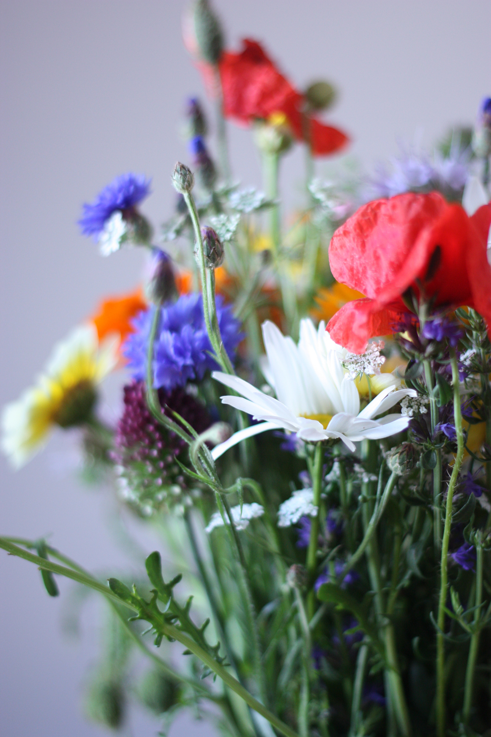 summer_flowers_3