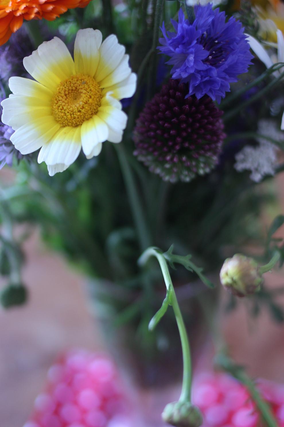 summer_flowers_5