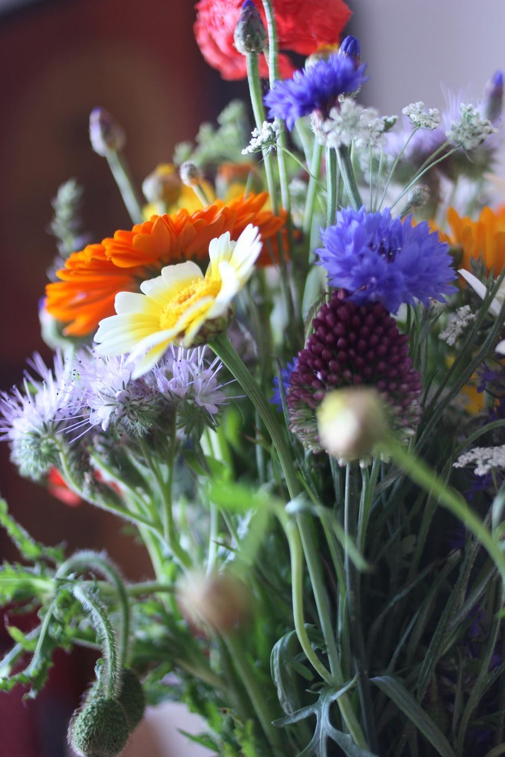 summer_flowers_6