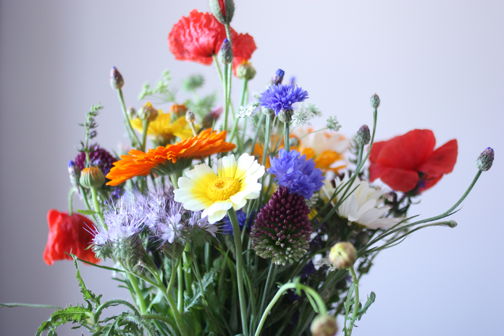 summer_flowers_7