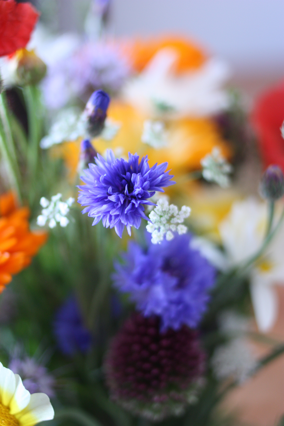 summer_flowers_cornflower