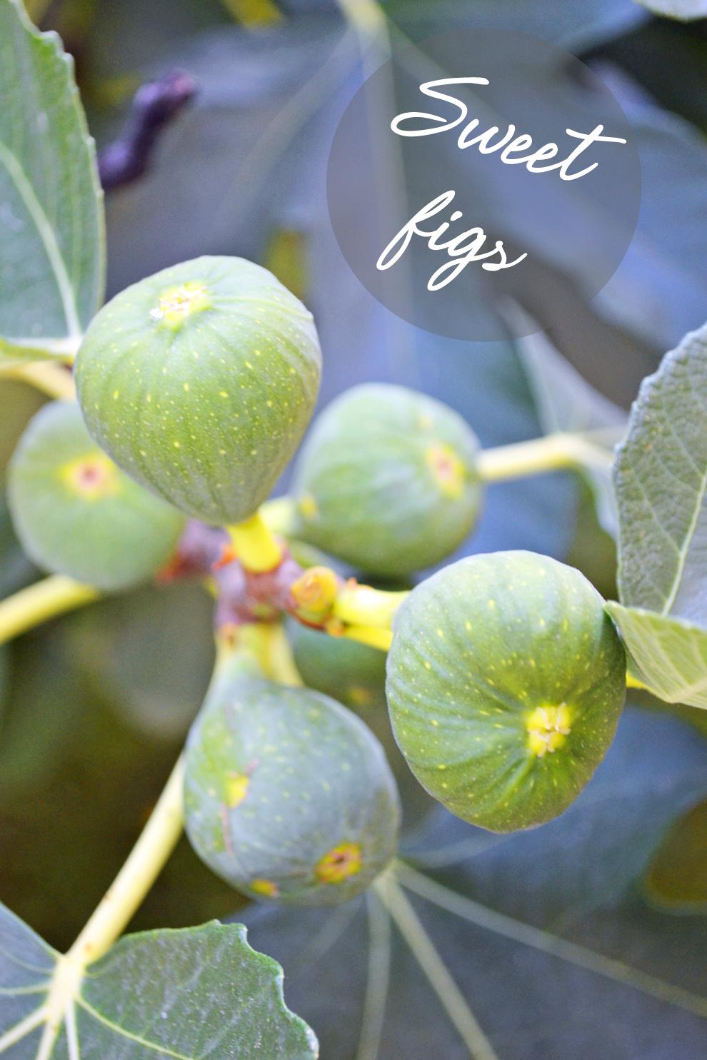 figs_igor