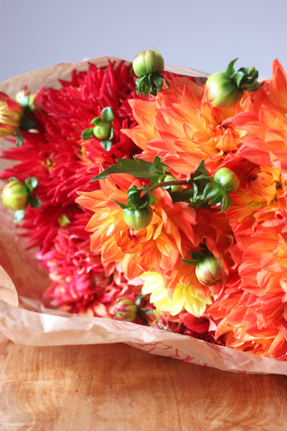 2flowergirls_dahlia_10