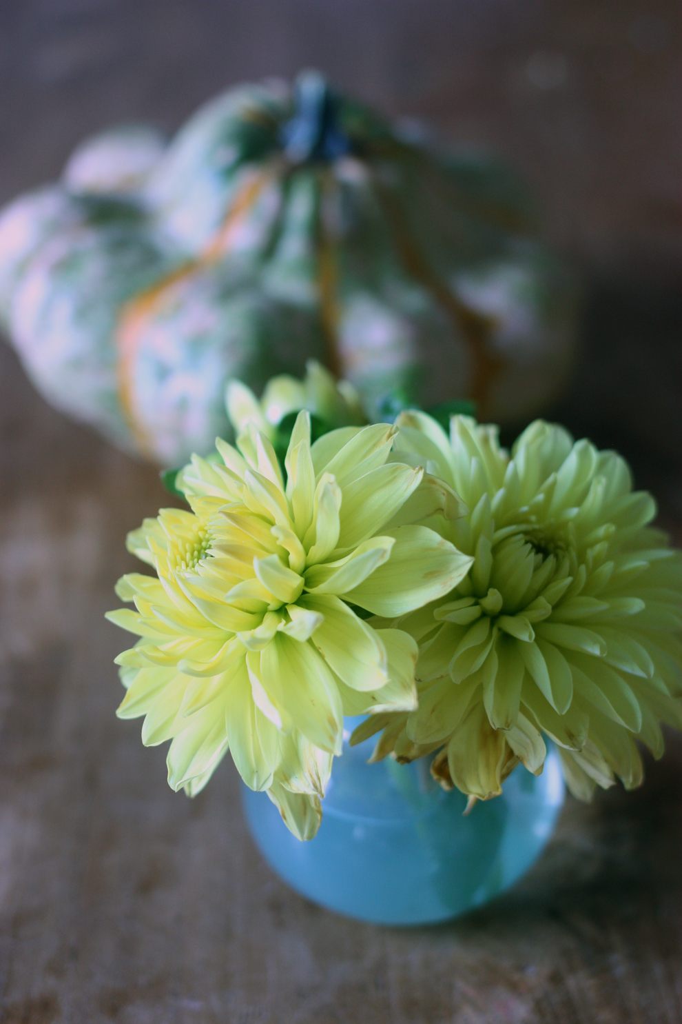 2flowergirls_dahlia_mini_yellow