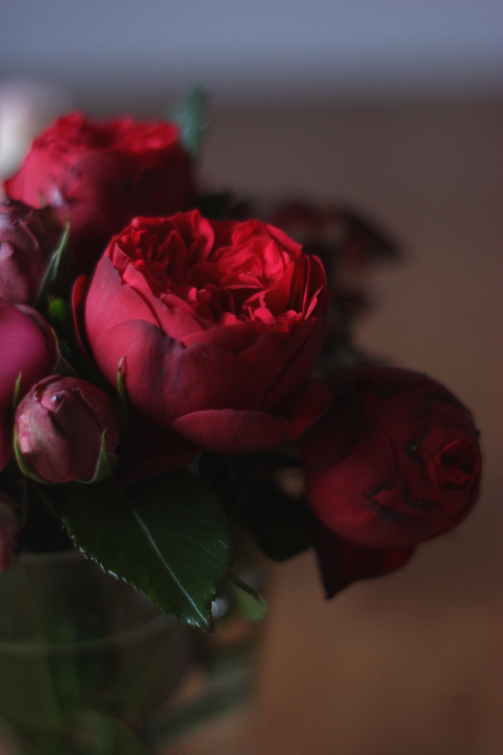 red_and_pink_roses_15