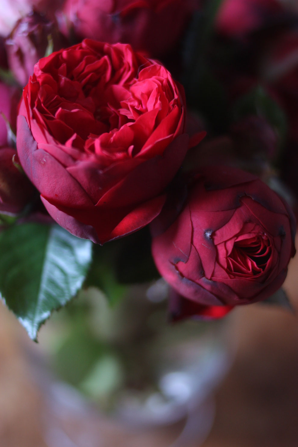 red_and_pink_roses_9