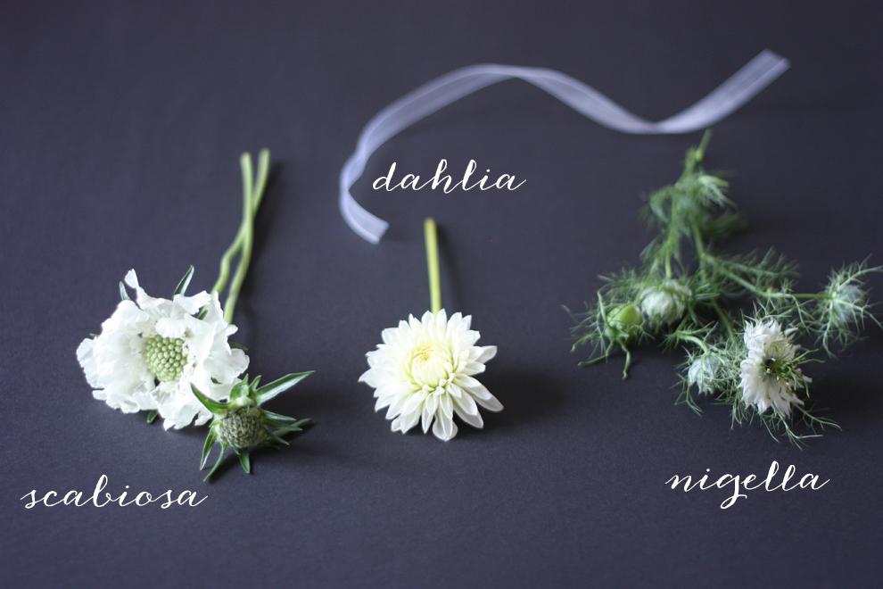 scabiosa_dahlia_niggela