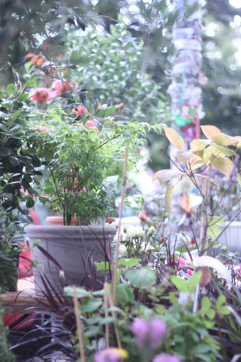 gruene_flora_outside