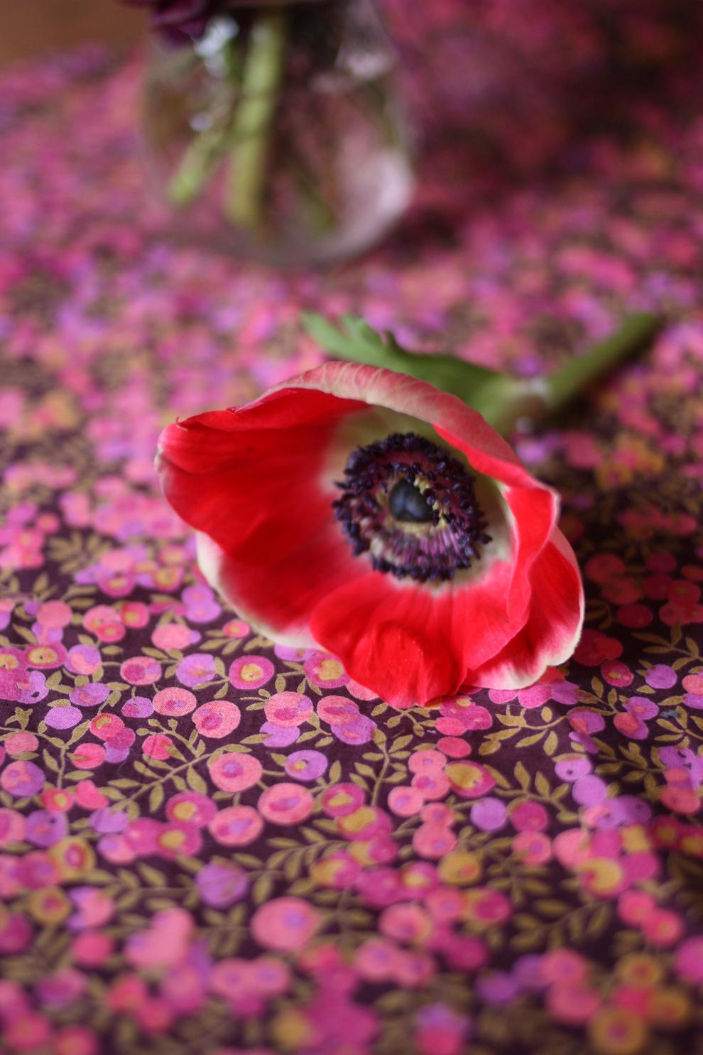 anemone on Liberty