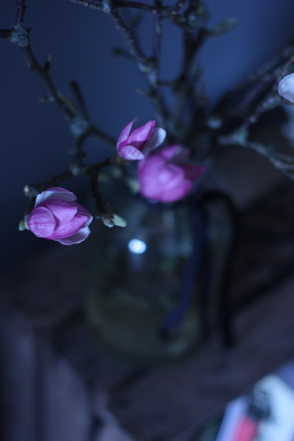 magnolia_1