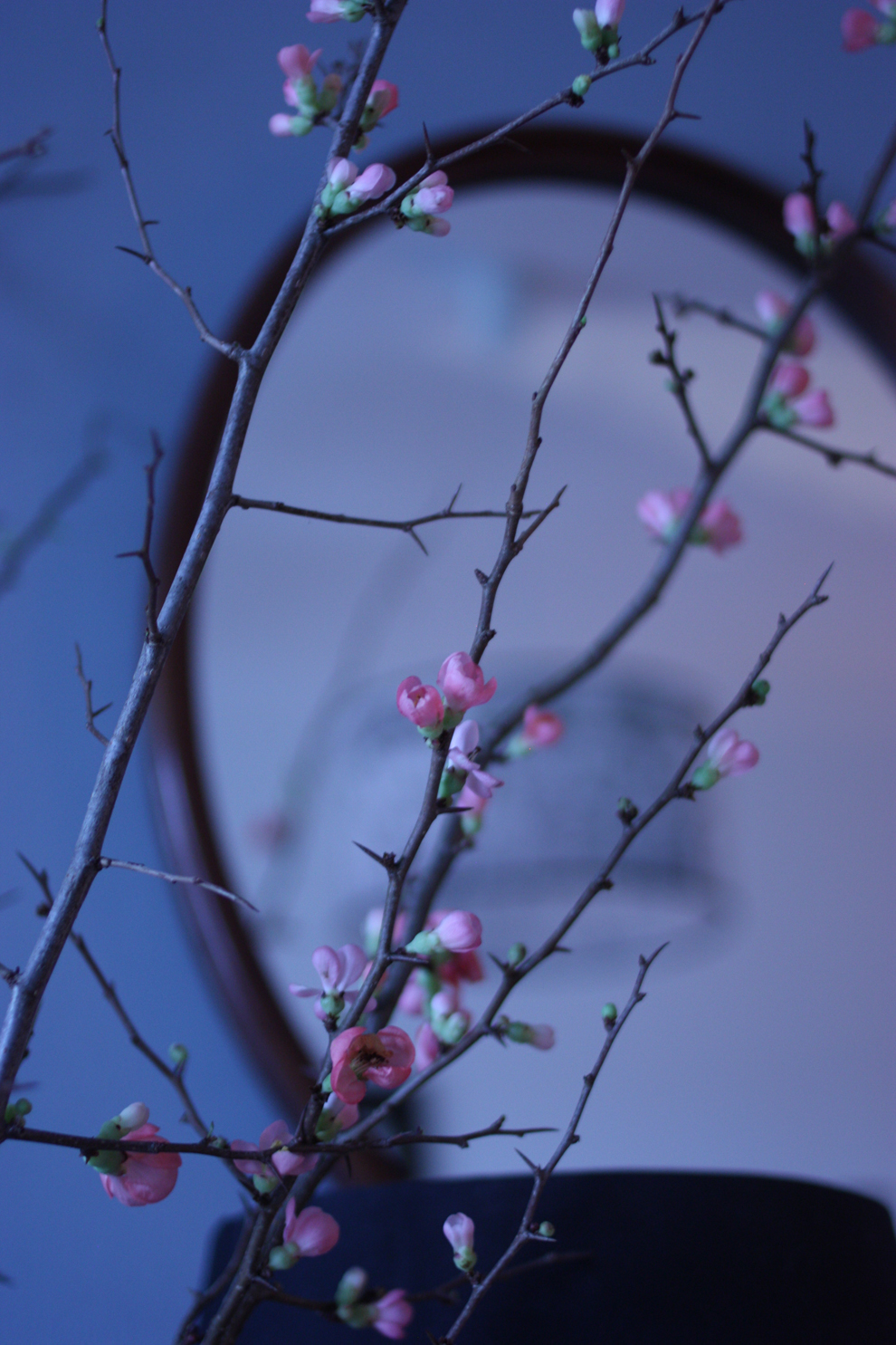 quince_branches_mirror