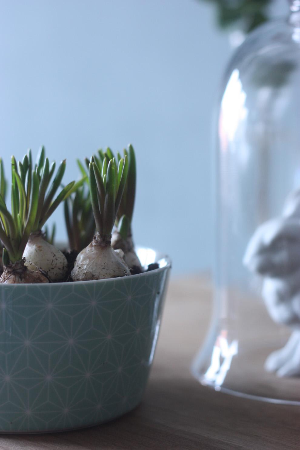 BRÅKIG_Plants