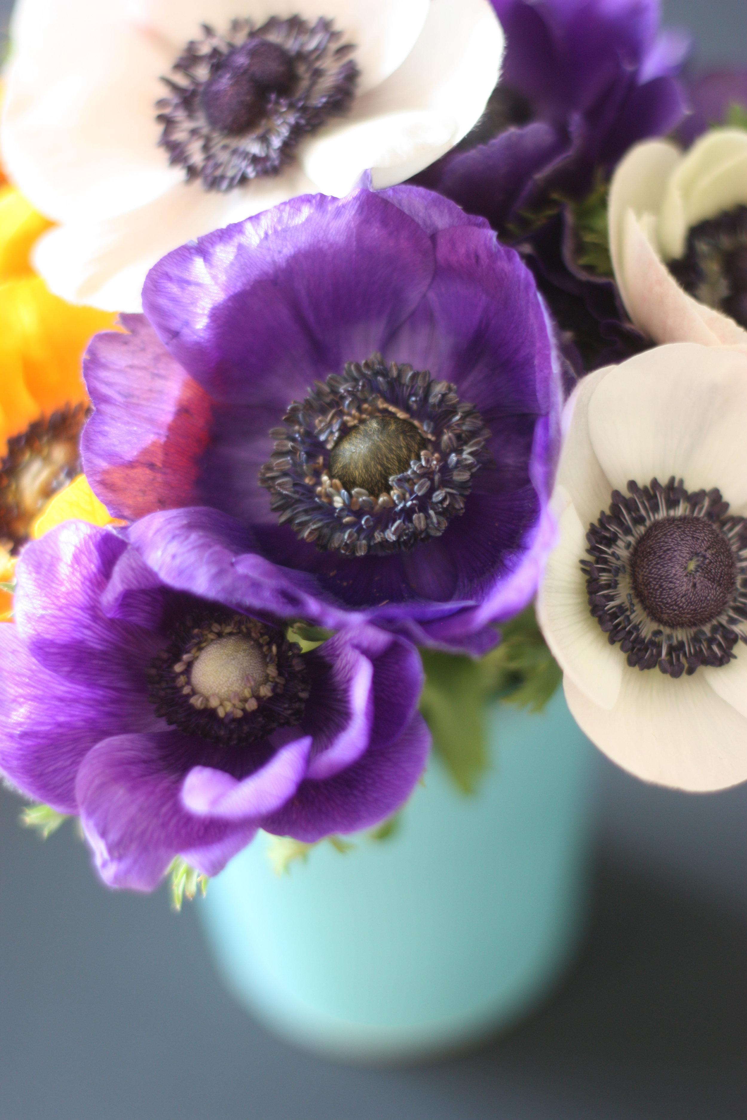 2flowergirls_anemone_blue