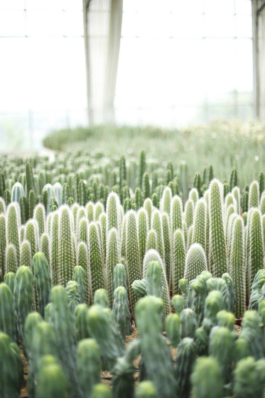 cactus glasshouse
