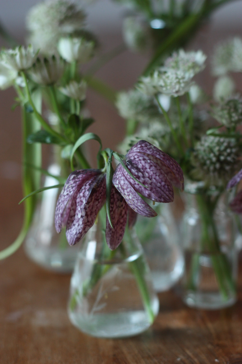 LIV_by_TM_Interior_mini_vases_astrantia