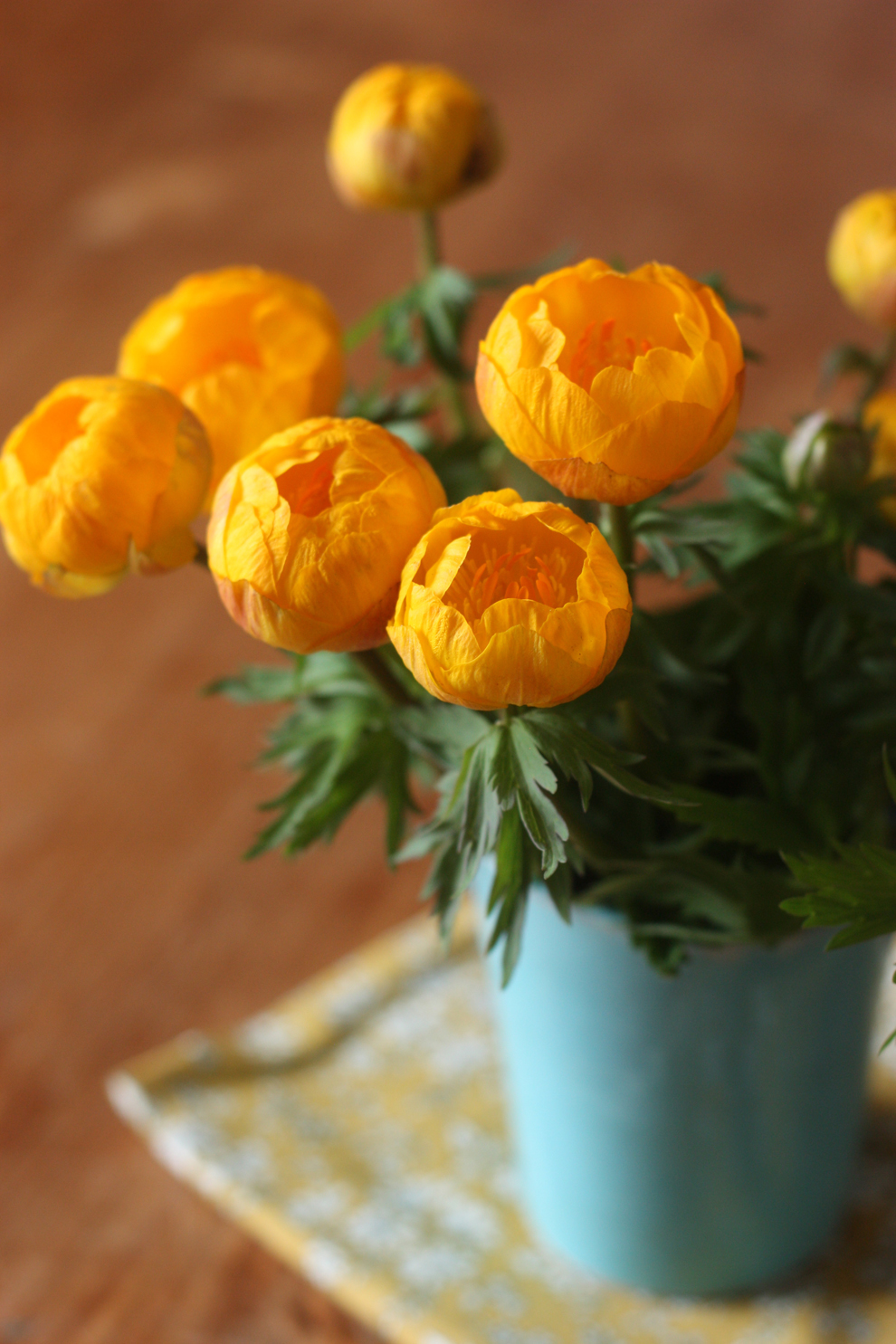 Trollius_by_madame_love_1