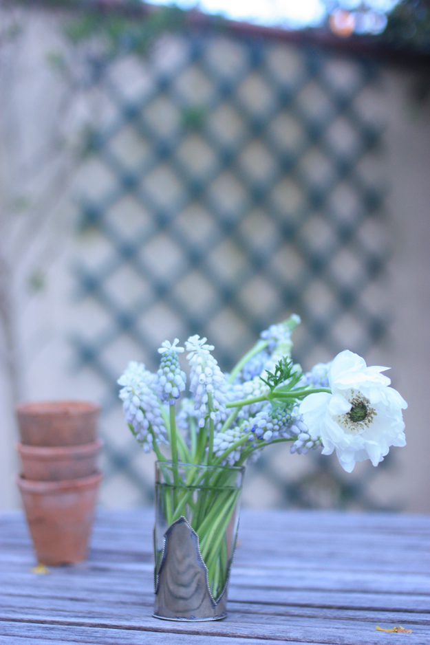 anomes and muscari