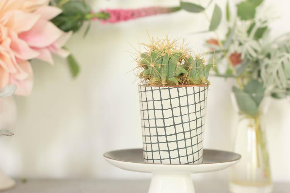 cactus dans pot a carreaux