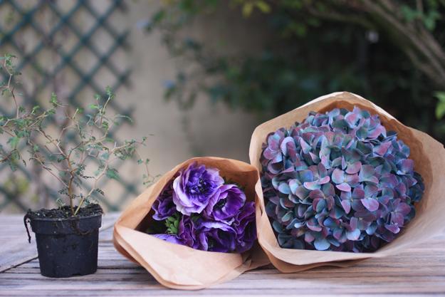 first flowers - anemones, sophora, hydrangea