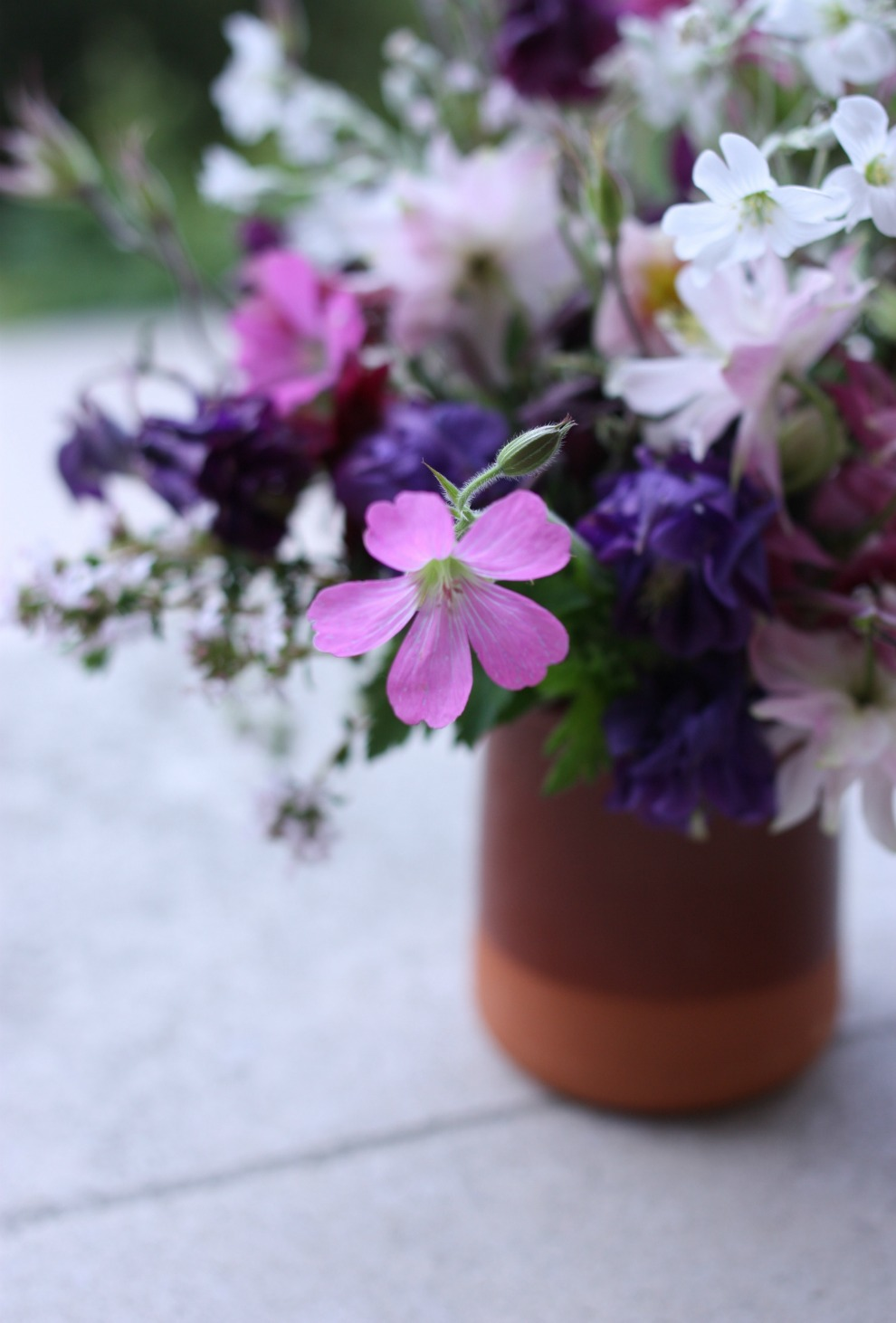from the garden_