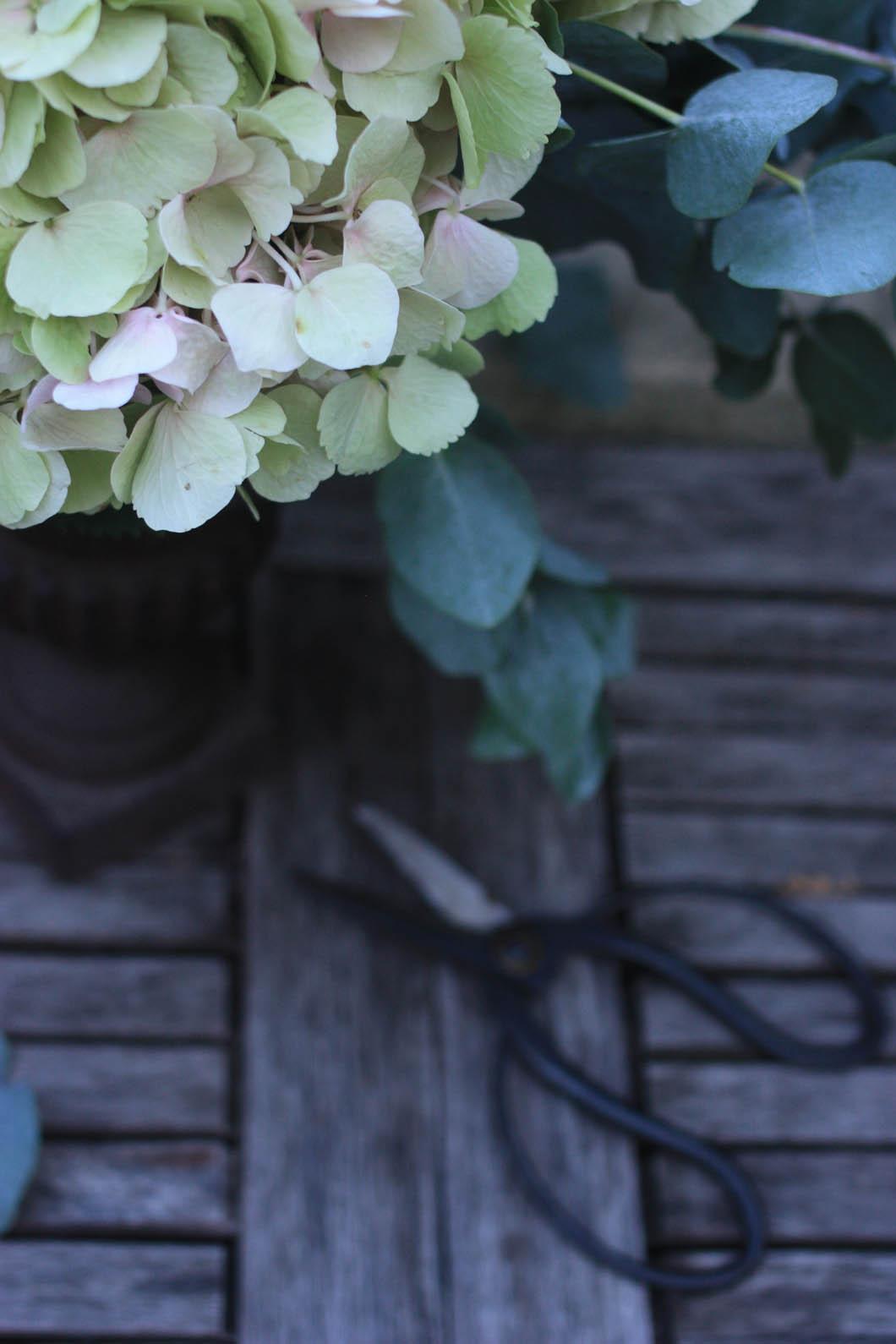 hydrangea and eucalyptus