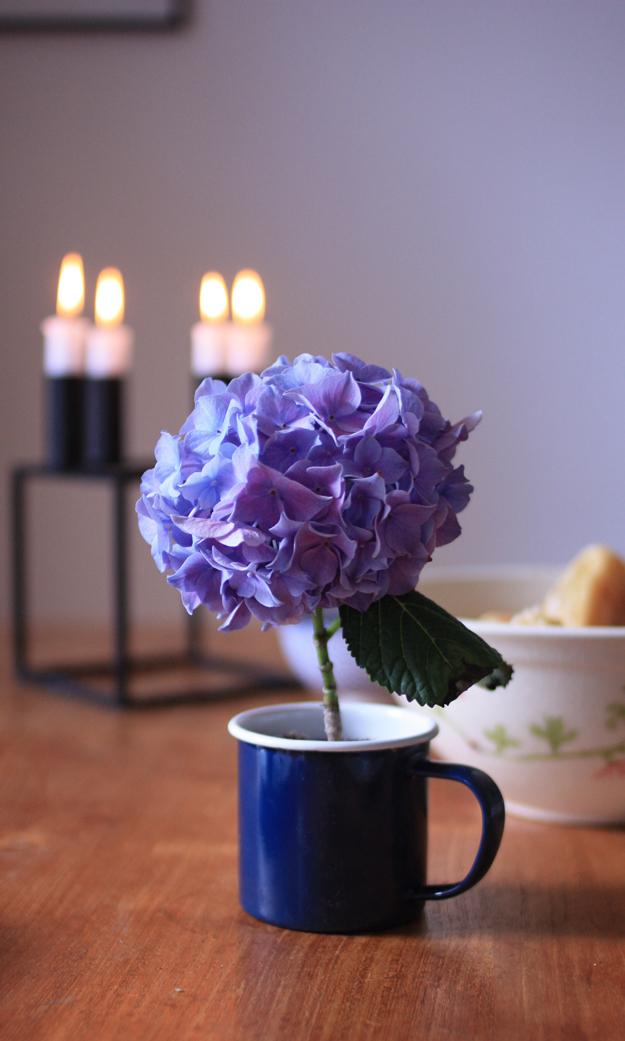 hydrangea_breakfast_2
