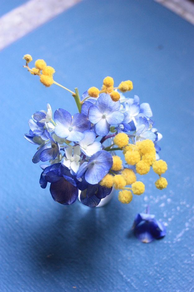mimosa_hortensia