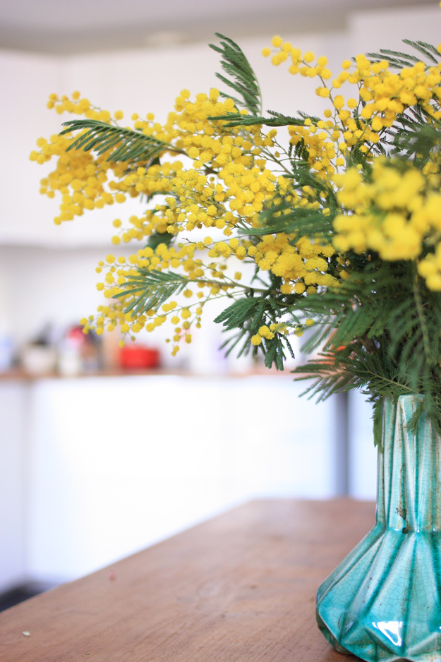 mimosa_in_blue_vase