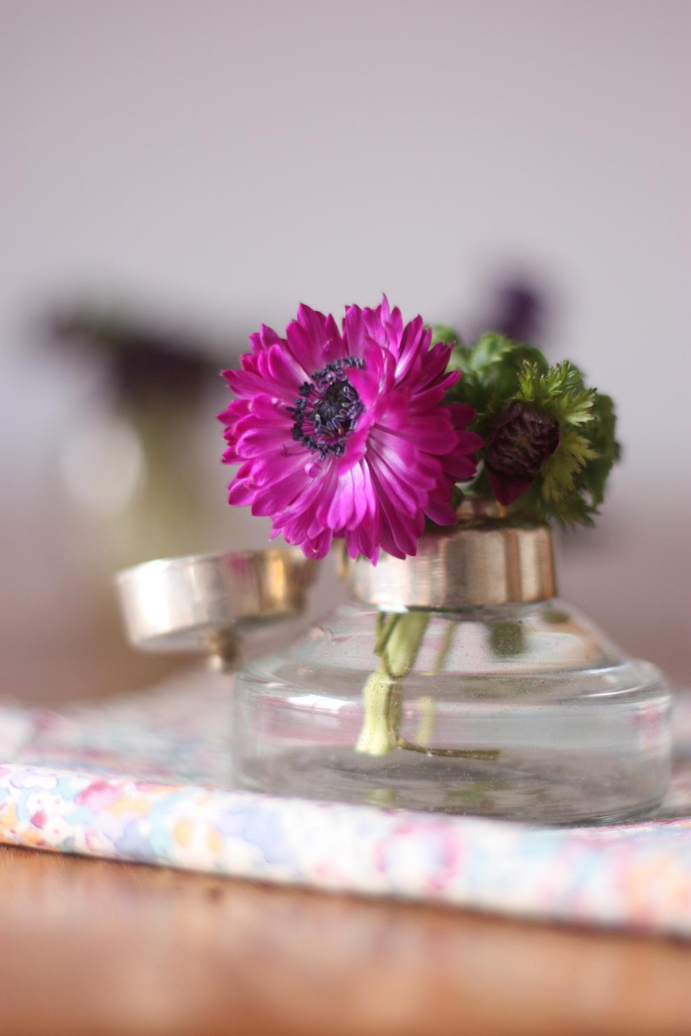 mini anemone