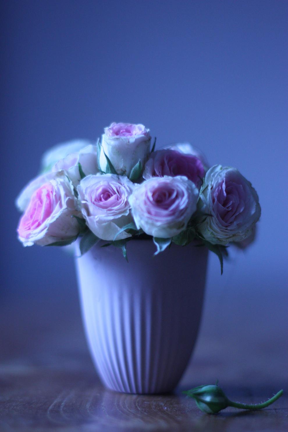 mini-roses