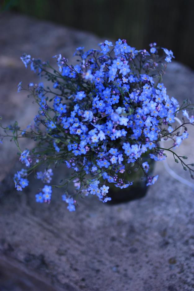 myosotis_bouquet_1