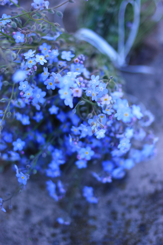 myosotis_bouquet_2