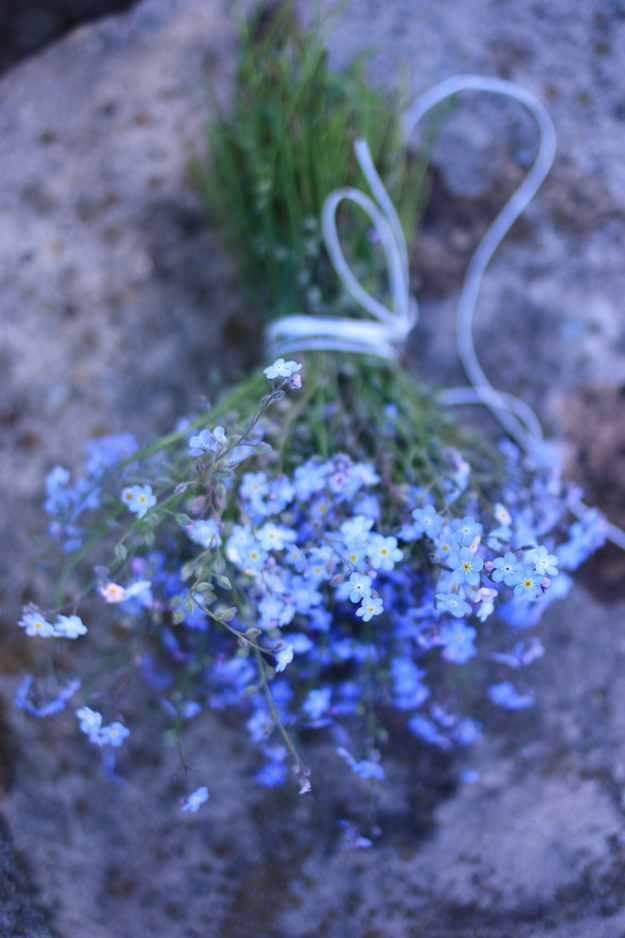 myosotis_bouquet_above