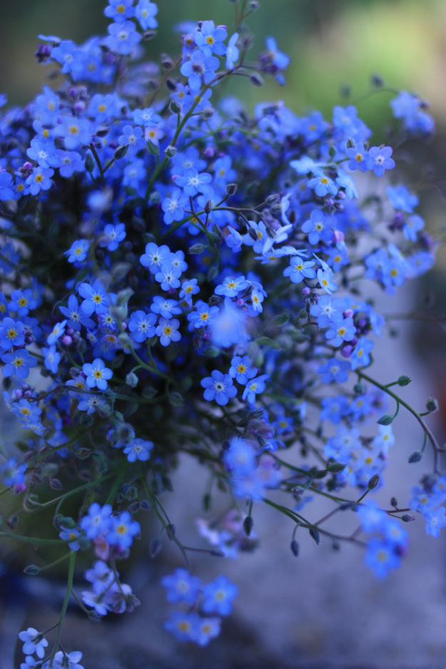 myosotis_bouquet_side