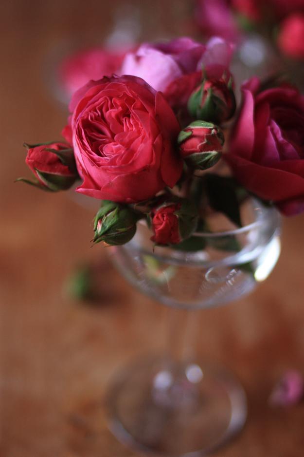red_garden_roses_4