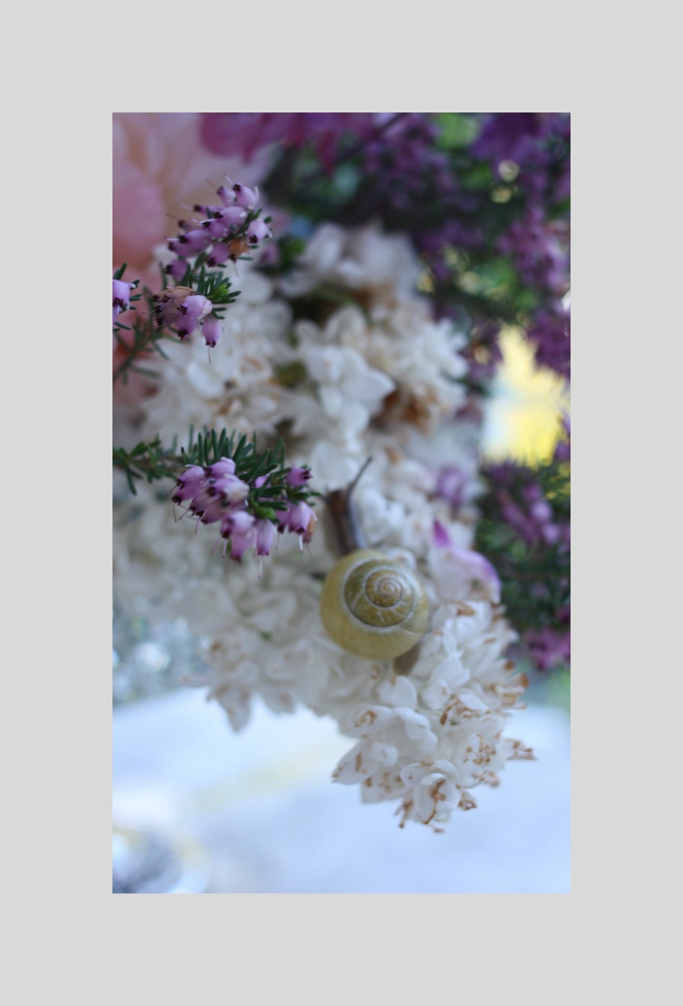 snail on lilac