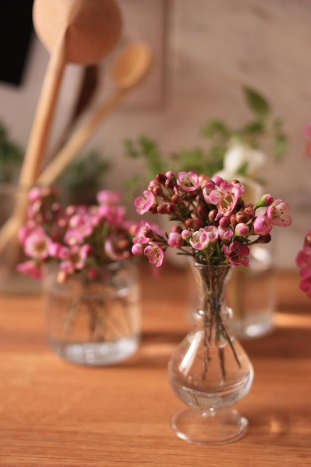 wax flower_6