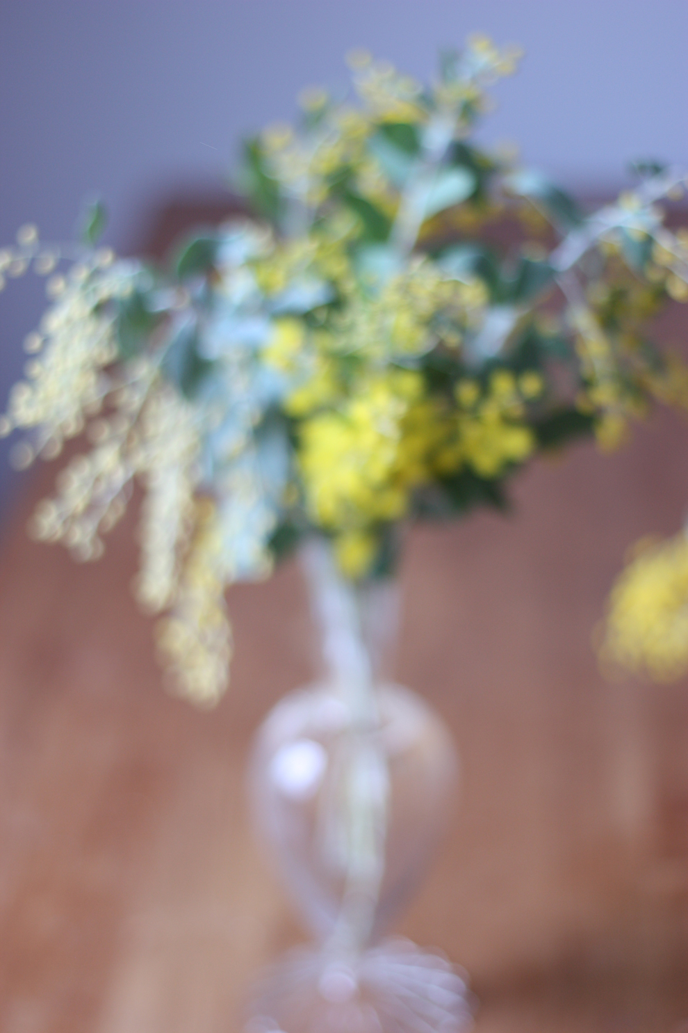 blurry-mimosa-by-madame-love