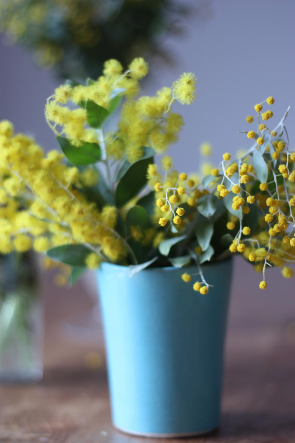 mimosa-in-blue-vase