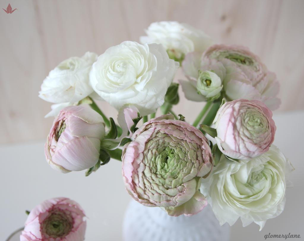 2flowergirls pink and white by glomerylane