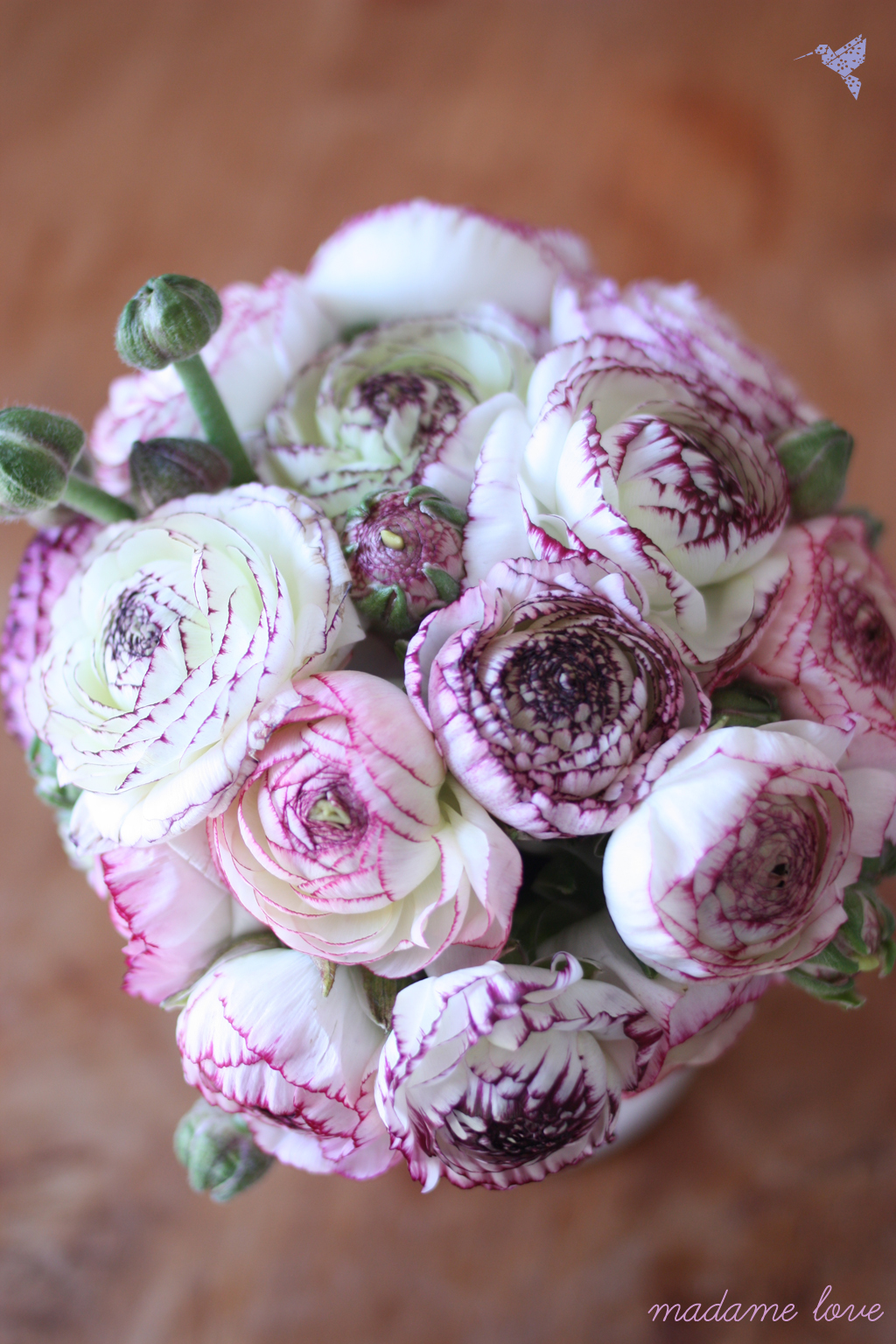 ranunculus from above by madame love