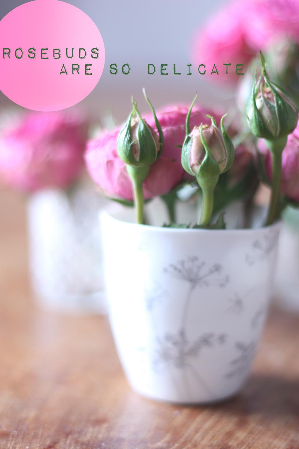 rosebuds are so delicate