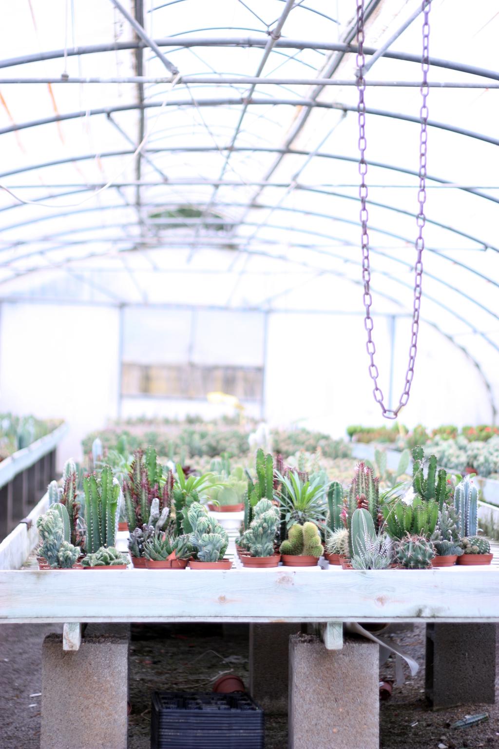 cactus_farm_1