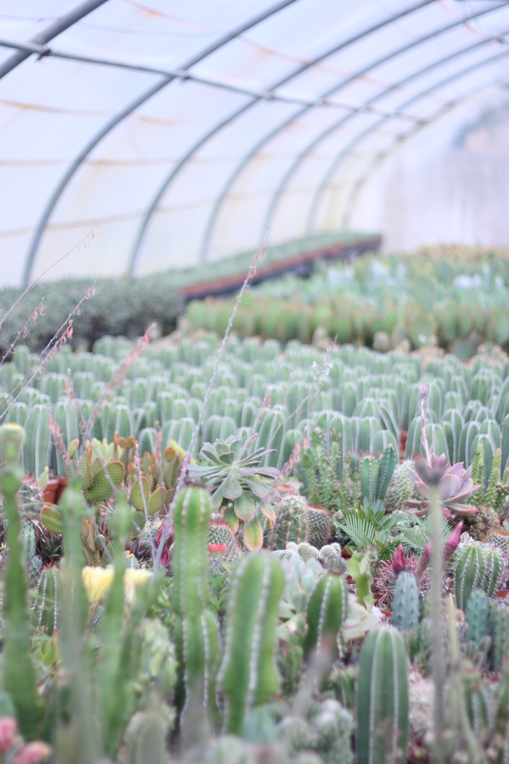 cactus_farm_10