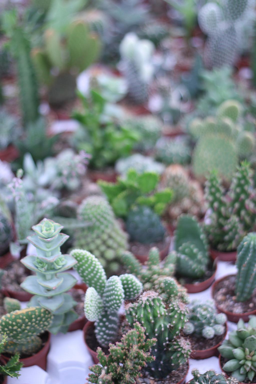 cactus_farm_by_madame_love