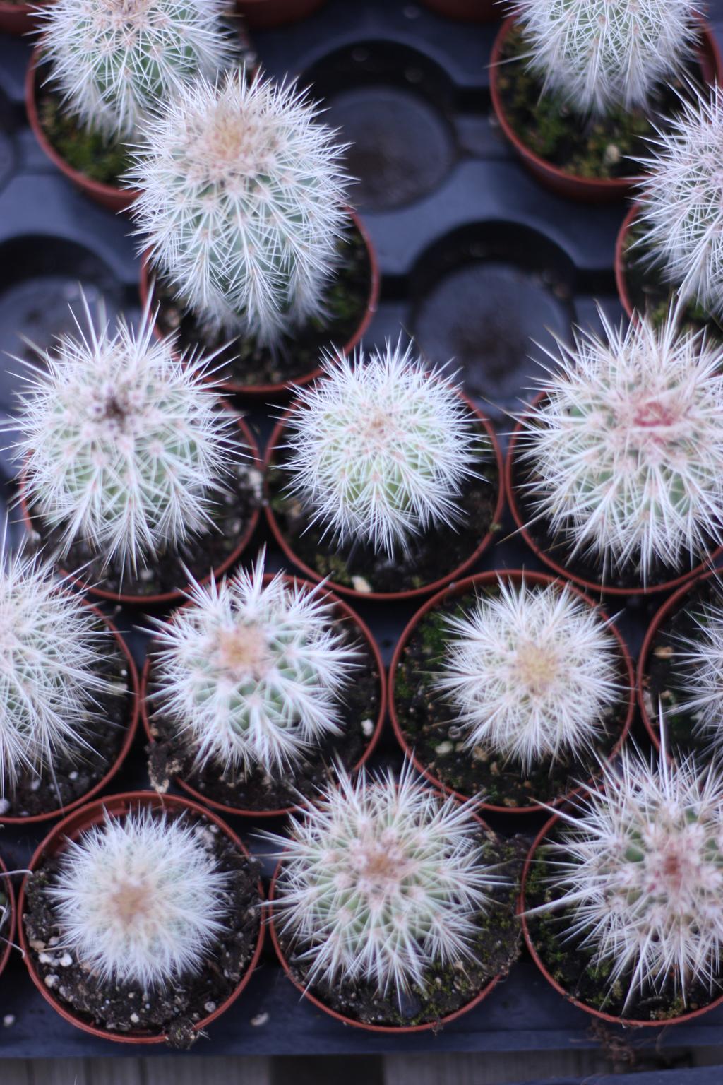 cactus_farm_3