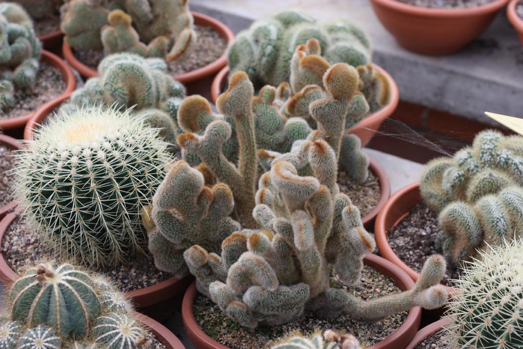 cactus_farm_6
