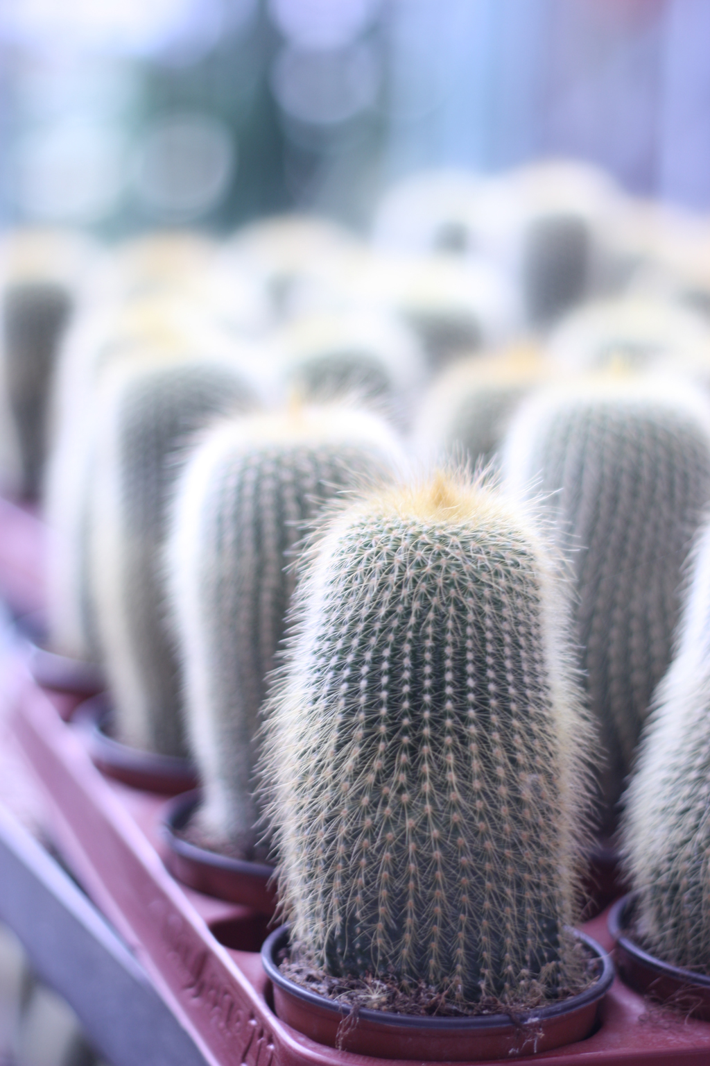 cactus_farm_9