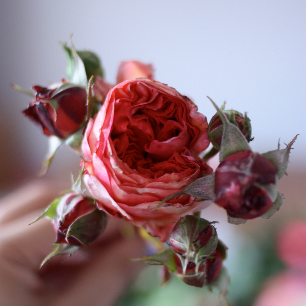 2flowergirls_single_rose