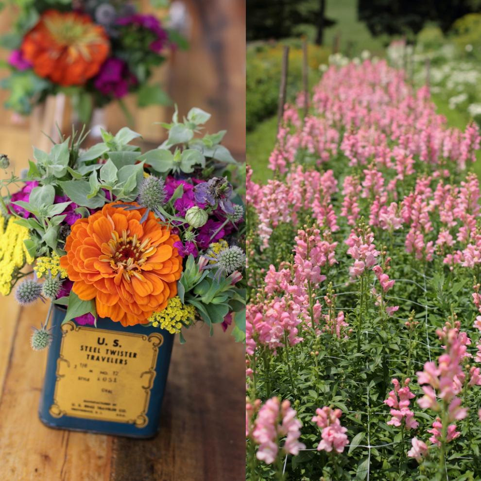 Love_n_fresh_flowers_fields